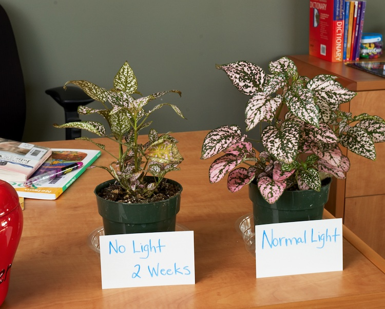 Help you save mineral water and also fertilize your plants - Plants that need no sunlight ...