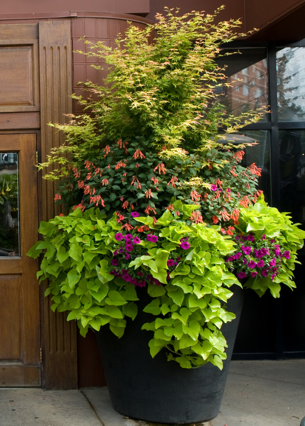 summer beautification commercial planters